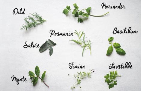 Din guide til krydderurter